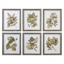 Uttermost 33643 - Uttermost Seedlings Framed Prints S/6
